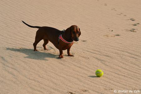 W ochy typy na pobyt z psem typy na wakacje e - Bagno wanda cesenatico ...